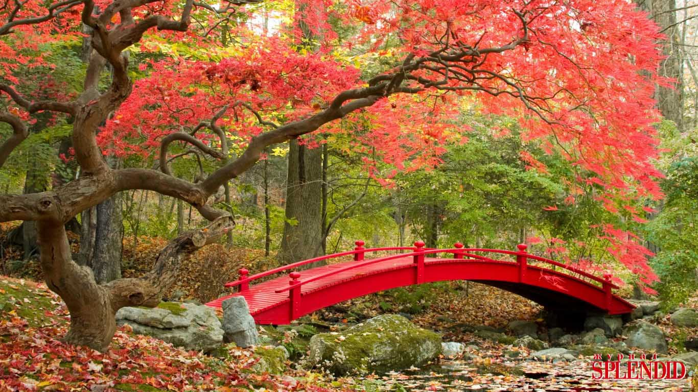 autumn-park-bridge-fall-1029