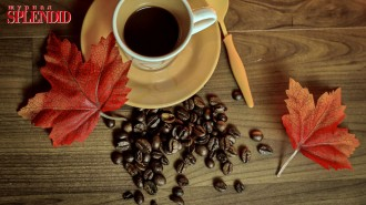 coffee-beans-cup-leaves