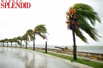 A broken palm tree is seen at the seafront of Caibarien after the passage of Hurricane Irma, Cuba
